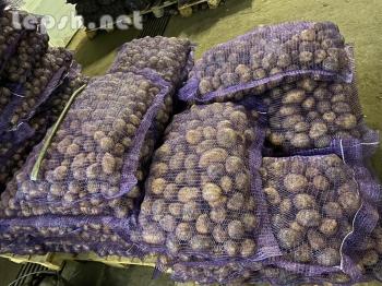 Продаю - Реализуем картофель оптом