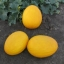 Семена оранжевого томата Айсан (KS 18 F1) фирмы Китано!