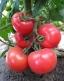 Семена розового томата KS 14 F1 фирмы Китано!